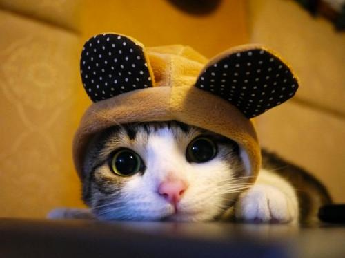 В России 40 домашних котов съели пенсионераЪ!