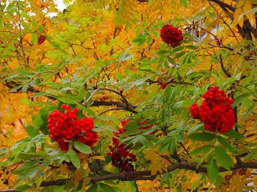 Осенние приметы налюбовь, удачу иденьги