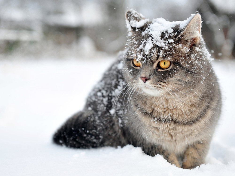 Какой будет зима 2019-2020: приметы