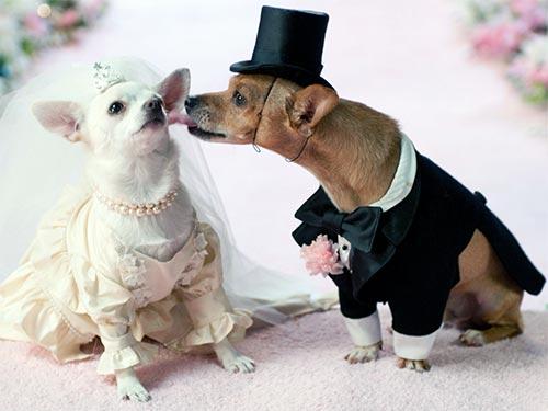 Свадебные приметы: стоит ли им доверять?