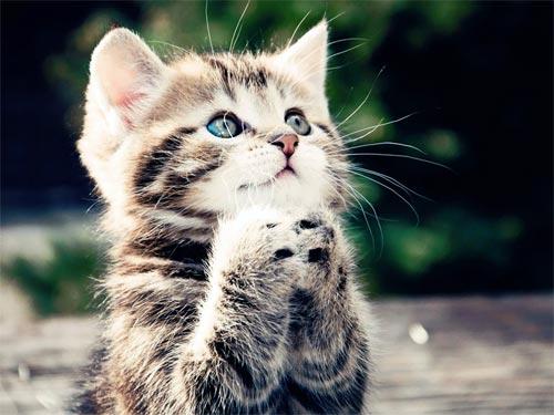 Кошки в доме: удача или проклятье