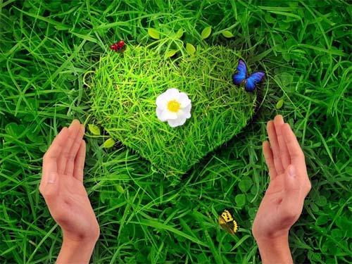Лечебные травы: как избавить себя от негативной энергетики