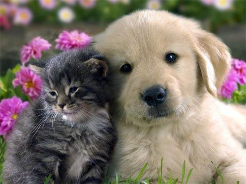 Василиса Володина: какие животные по гороскопу принесут удачу в ваш дом