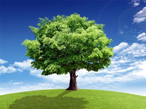 Дерево-покровитель по Знаку Зодиака