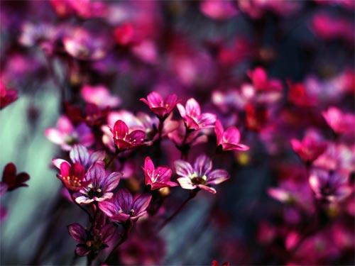 Народные приметы о цветах