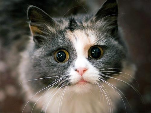 Дарья Миронова: какую энергетику несет ваша кошка