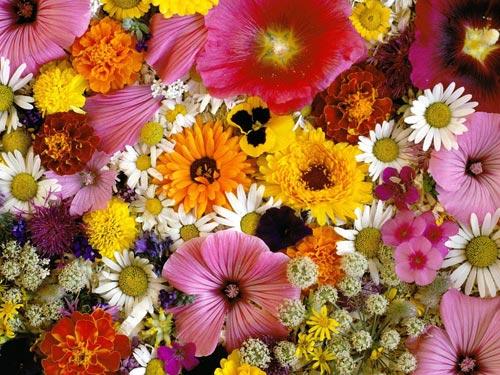 Приметы и суеверия о цветах: какие растения нельзя держать в доме