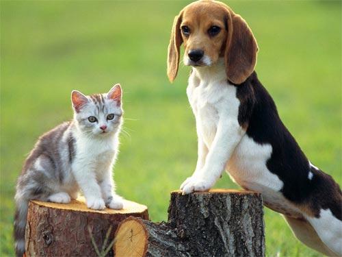 Нумерология даты рождения: какое домашнее животное вам подходит