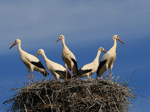 Народные приметы про птиц: к счастью или беде