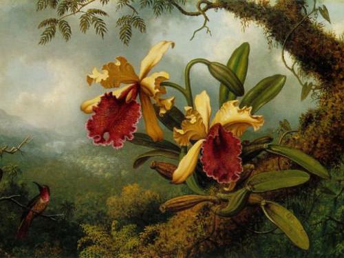 Цветок безбрачия: какие опасности он таит