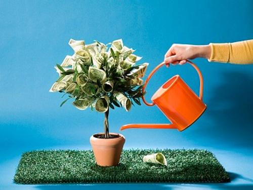 Долларовое дерево в доме: как ухаживать за ним для привлечения денег