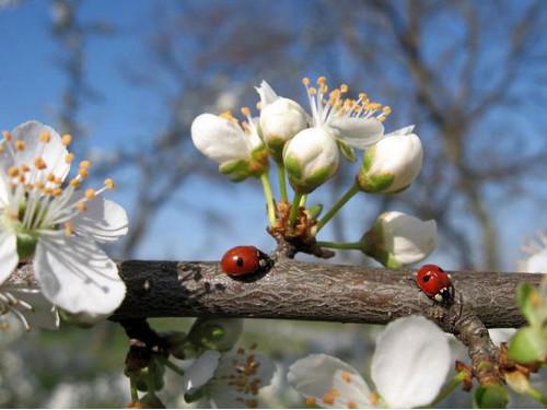 Какая будет весна в 2015 году: прогнозы погоды и народные приметы