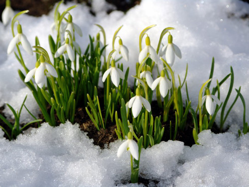 Приметы на Сретение Господне 15 февраля