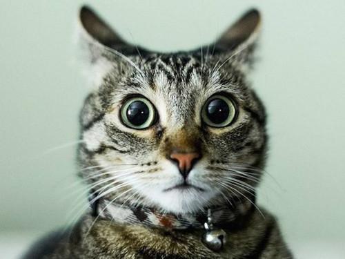 Кошачий язык: как понимать кошку