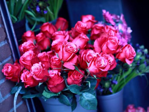 Розы в доме: приметы и свойства