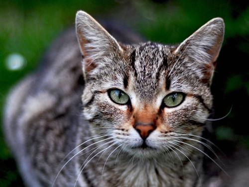 Как окраска кошки влияет на атмосферу в доме