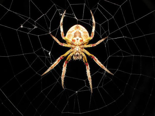 Приметы о пауках: как реагировать на незваных гостей в доме
