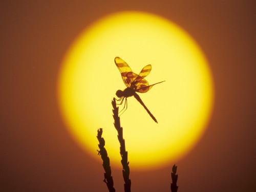 10 примет в День летнего солнцестояния 2015