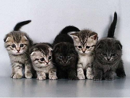 Фелинотерапия или как кошки лечат людей
