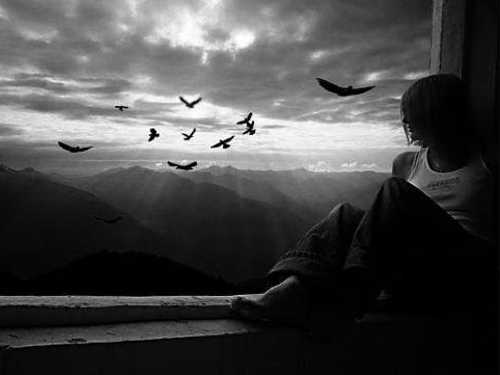 Если птица залетела в окно: приметы