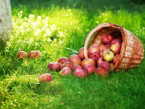 Яблочный Спас в 2015 году