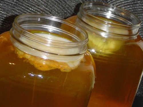 Чайный гриб: как вырастить и ухаживать