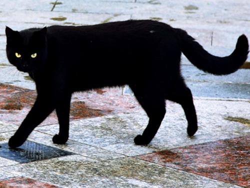 Что делать, если черная кошка перешла дорогу: защитные приметы