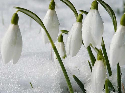 Народные приметы февраля. Когда придет весна?