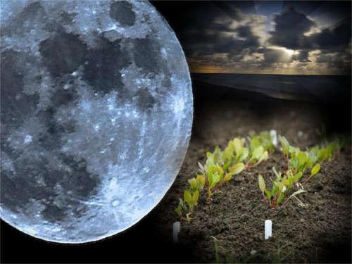 Когда нужно сажать рассаду по Лунному календарю