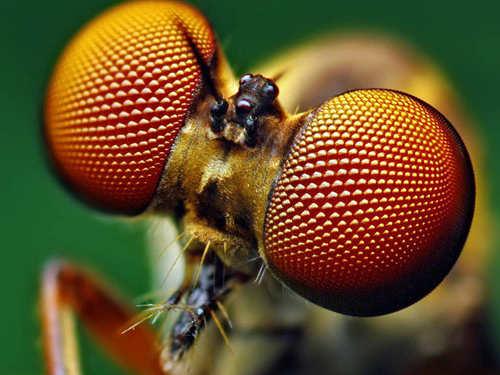 Кчему снятся насекомые