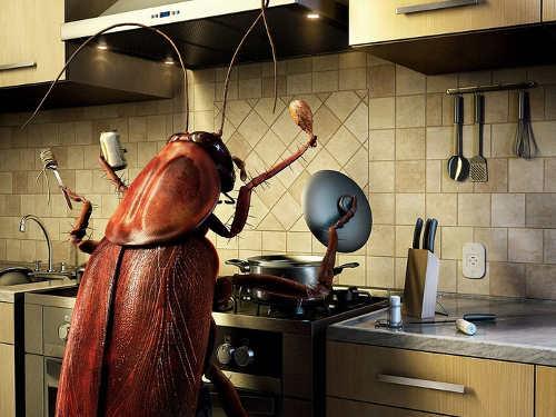 Кчему снятся тараканы
