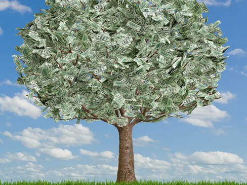 Долларовое дерево: растим богатство своими руками