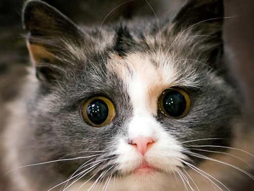 Как кошка влияет наэнергетику дома