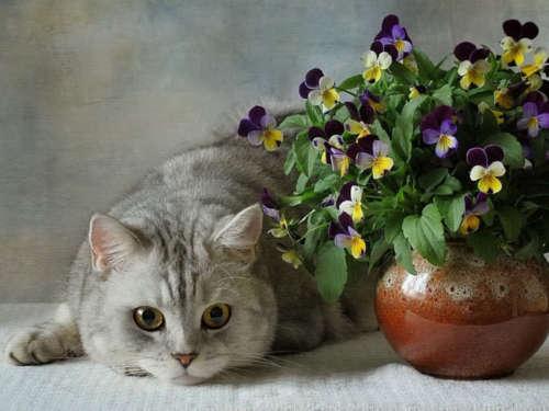 Цветы и благополучие в доме