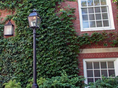 Энергетика цветов: можно ли держать дома плющ