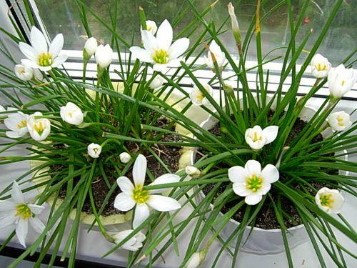 Какие цветы принесут вдом счастье