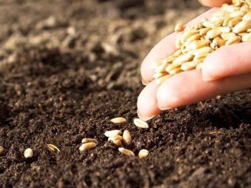 Заговоры имолитвы вовремя посева: как привлечь хороший урожай