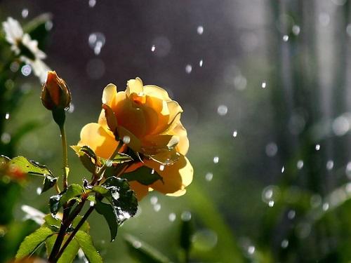 """Обряд для привлечения любви """"Распустившийся цветок"""""""