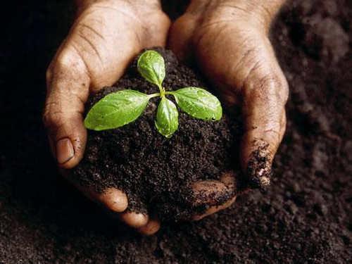 Симонов день: приметы итрадиции на«Именины Земли»