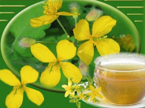 Лечение чистотелом: настойки, рецепты и свойства