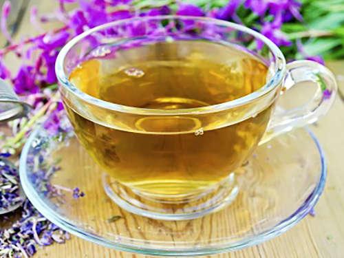 Травник: когда собирать иван-чай в 2016 году