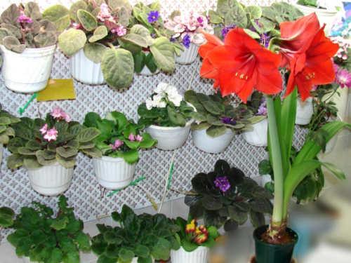 10«несчастливых» цветов, которые нельзя держать вдоме