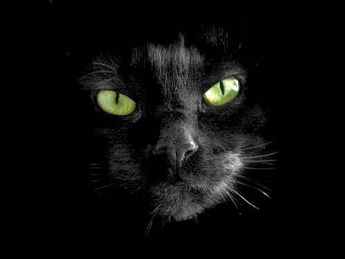 Энергетика черного цвета: носить или неносить?