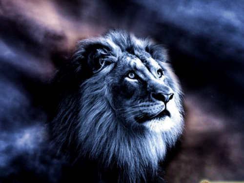 10необычных фактов оЗнаке Зодиака Лев