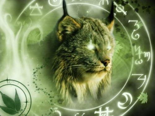Как определить тотемное животное по Знаку Зодиака