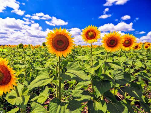 Цветочный гороскоп: какое растение принесет вам удачу