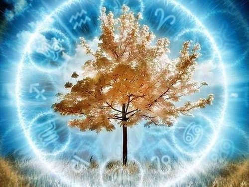 Гороскоп Друидов: как определить свое дерево-покровитель