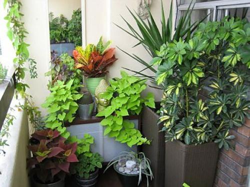 Цветы-талисманы: какие растения защищают дом отбедности инеприятностей