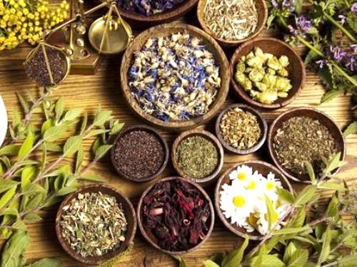 Травы-обереги: какие растения привлекут благополучие изащитят отбед