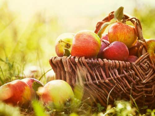 Яблочный Спас: суть иистория праздника